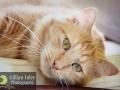 Gillian Foley Photography   Pet Photography